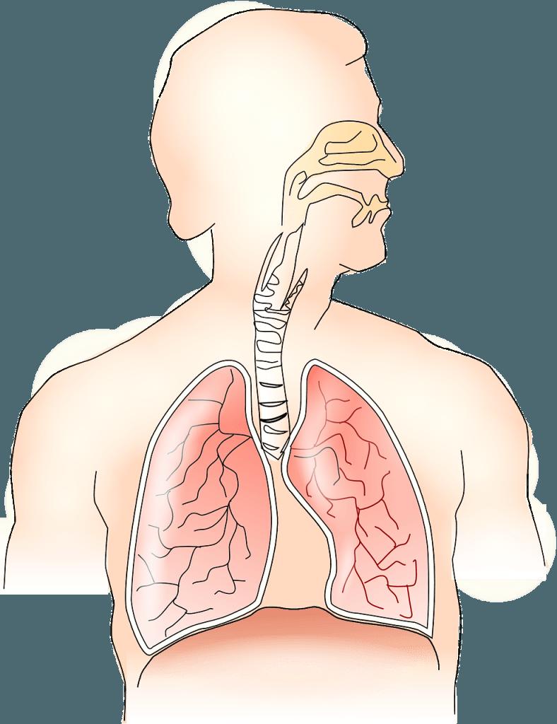 Tumore e dolore ai polmoni